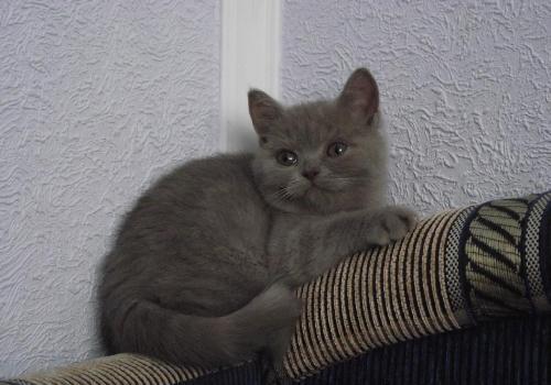 Ще одне кошеня знайшло свою сім'ю