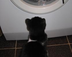 img_the_cat0