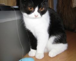 img_the_cat1