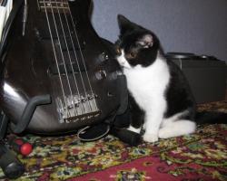 img_the_cat2