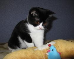 img_the_cat3