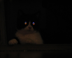 img_the_cat4