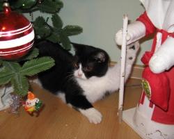 img_the_cat5