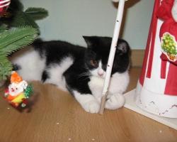 img_the_cat6