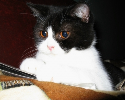 img_the_cat7