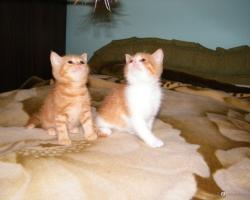 Кошенята від Злати